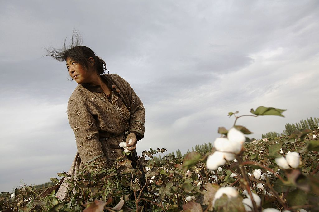 us cotton supply estimate drops 12 on strong china