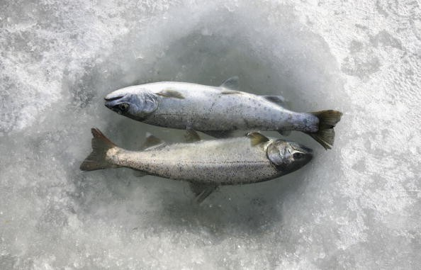 The online community was outraged over the parks plan to use frozen fish in the ice-skating ring