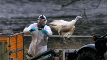 Approximately 40 countries, including some in Europe, have reported new outbreaks of bird flu.