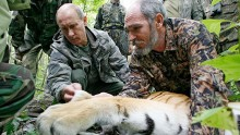 Vladimir Putin assists with the tagging of a Siberian tiger in 2008.