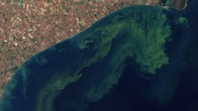 Toxic algal blooms