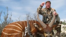 A green hunter and an African bongo