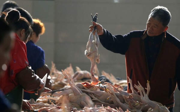China Chicken Exports