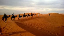 Human trade routes beginning 3,000 years ago shaped the genetic evolution of camels.
