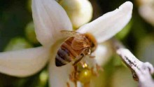 Beekeepers Prepare For Spring Pollination