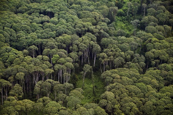 China's eco-civilization blueprint to cover nearly a quarter of China's land with forests.